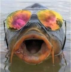 fish.thumb.JPG.ec3ed262ffc62a3cc17858f2e