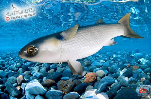рыб 1.jpg
