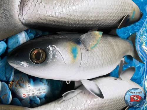 рыб 7.jpg