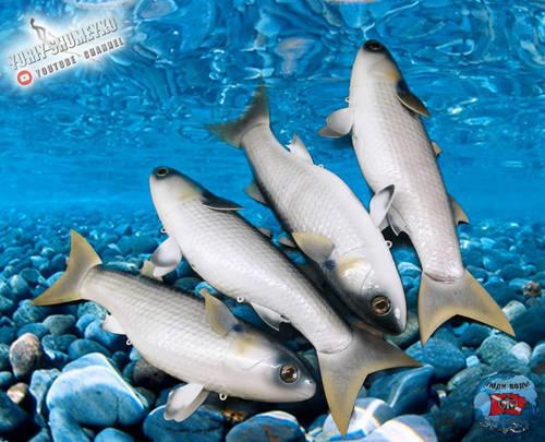 рыб 8.jpg