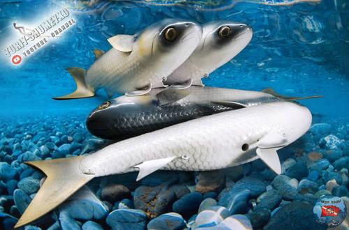 рыб 2.jpg
