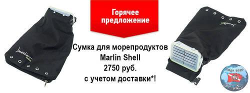 592125723_shell1.thumb.jpg.761418711ba57f33977b2f4e09e3e2fd.jpg